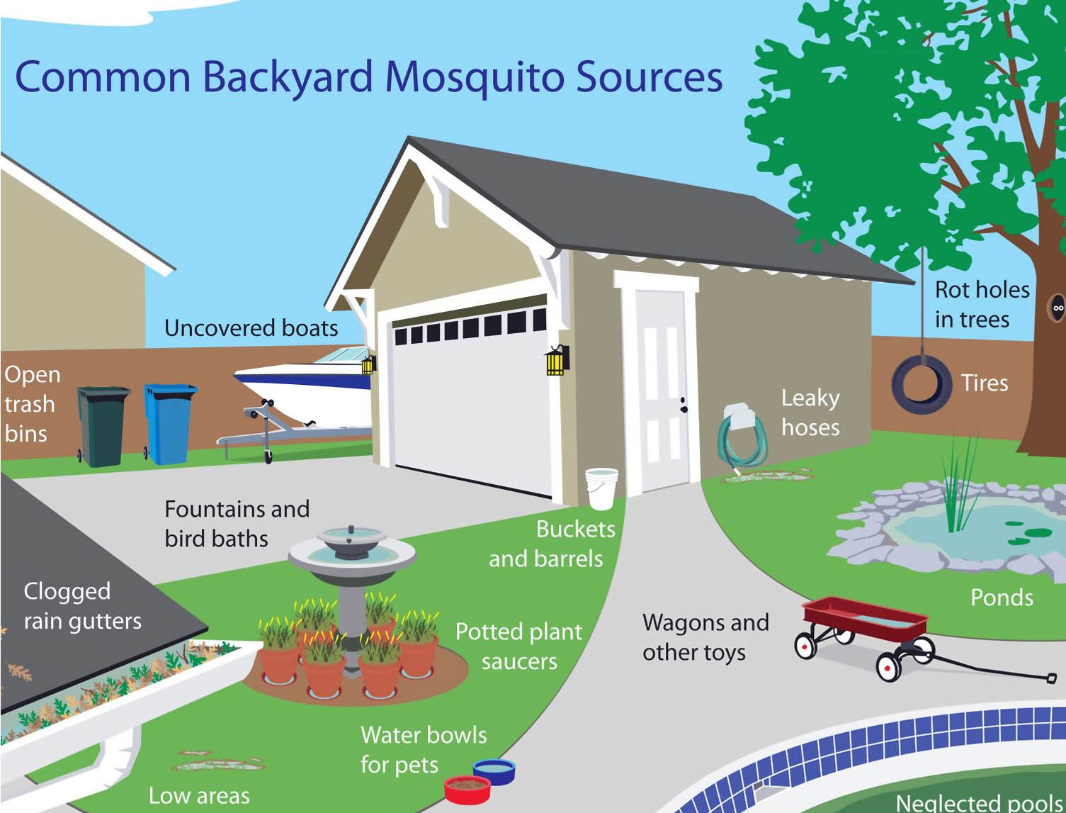 Common backyard mosquito sources diagram